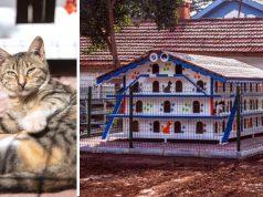 zgrada za smeštaj mačaka