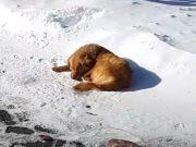 spava u snegu