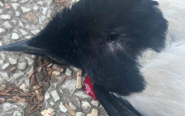 pucao i ubijao ptice