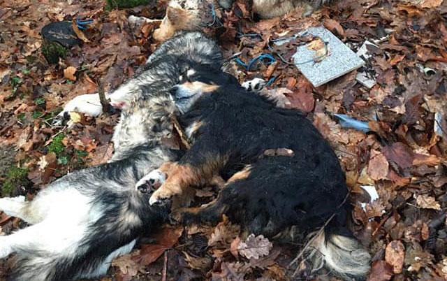 lovci ubili psa