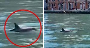 delfini u Veneciji