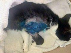 mačka pogođena dijabolom