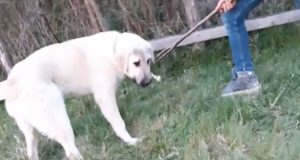 dečak muči psa