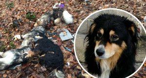 lovci ubijaju pse