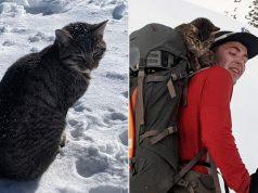 izgubljena mačka u Alpima