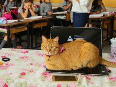 mačka ide u osnovnu školu