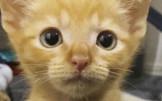 sudbina jedne mačke