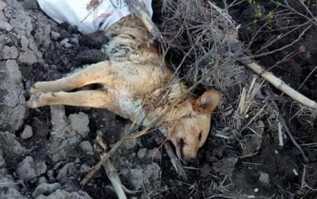 mladić ubio psa