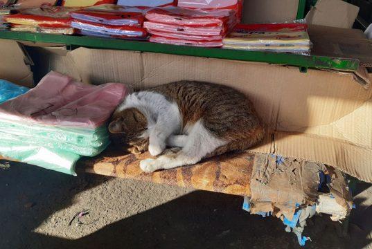 mačka živi na pijačnoj tezgi