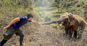 slon prepoznao veterinara