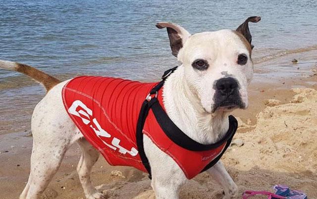 pas čuvar plaže
