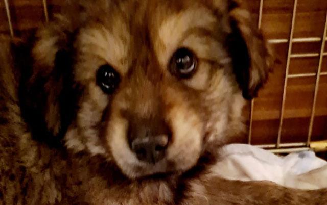 Borba za život štenaca