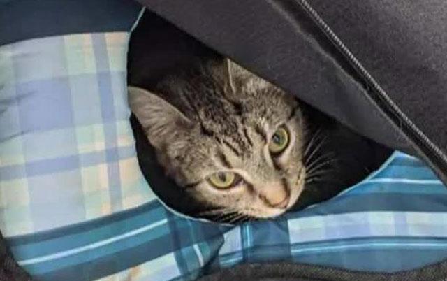 mačka se porodila u torbi