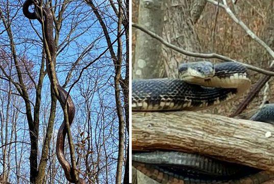 zmija u parku