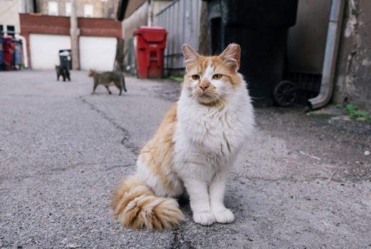 Mačke spasavaju Čikago