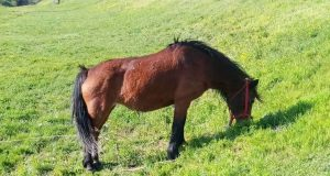 Konj na Novom Beogradu
