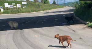 Izgubljeni psi na ulici