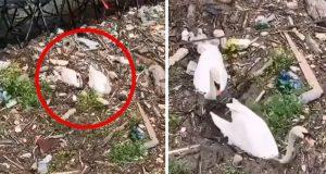 Beograd na vodi ubija labudove