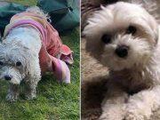 pronađen ukraden pas
