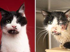 živ sahranjen mačak našao dom