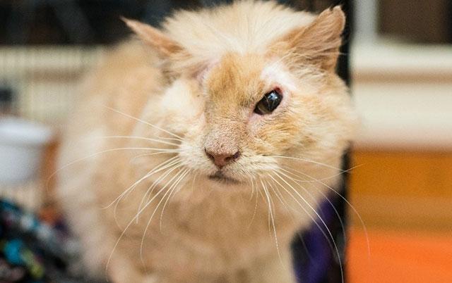 mačku bacili kiselinu u lice