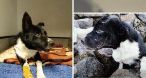 živ zakopan pas našao dom