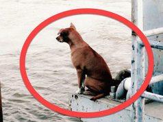 pas na obali reke