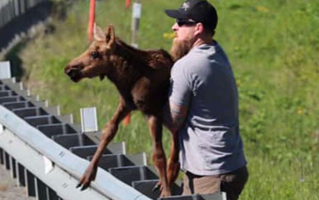 spasavanje bebe losa