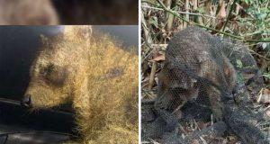 spasioci našli nepoznatu životinju