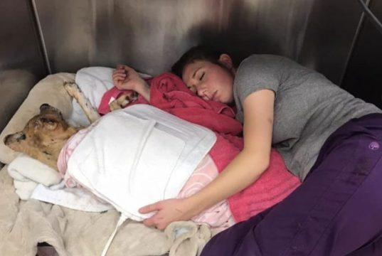 veterinarka spava sa psom