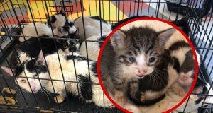 spaseno 16 mačaka