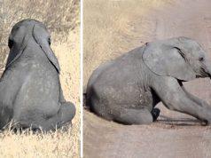 ljuta beba slona