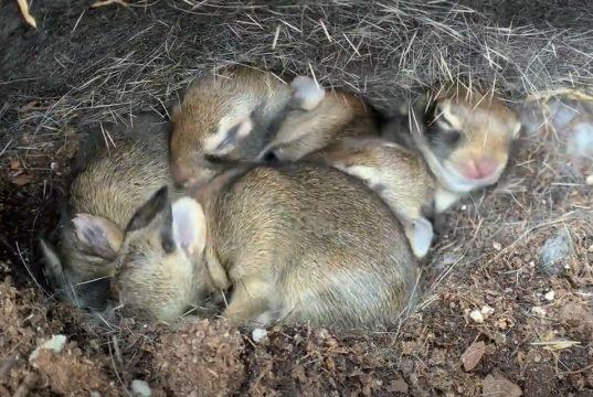 bebe zeca u džaku