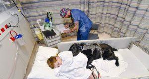 pas u bolničkom krevetu sa dečakom