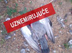 dečak ubija životinje u beogradu