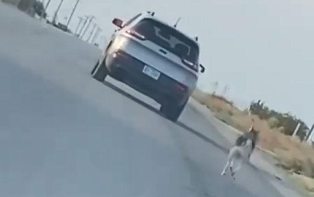 Izbacio haskija iz auta