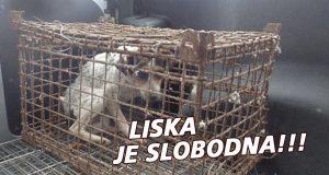 Pas oslobođen iz kaveza
