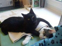 mačka medicinska sestra
