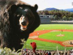 medved na olimpijadi