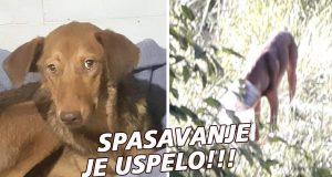 Spasavanje psa u Beogradu
