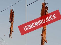 Zločin u Srbobranu