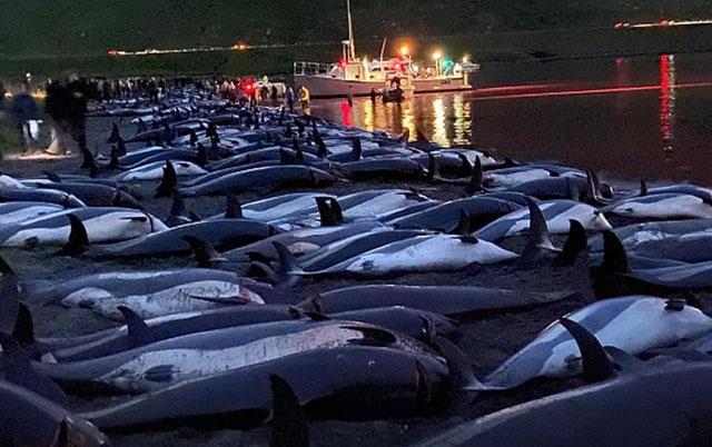 surovo ubijanje delfina