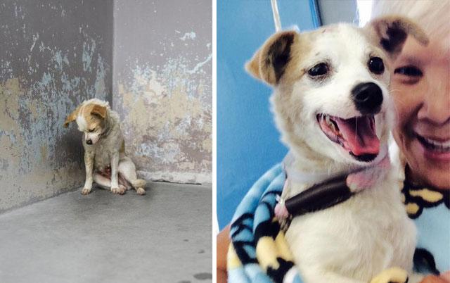 pas usamljen u azilu