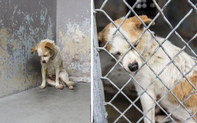 pas sedi tužan u azilu
