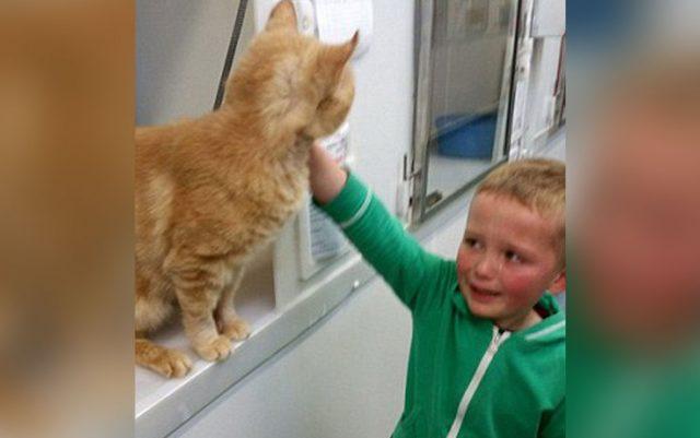 Feniks, pronađen mačak