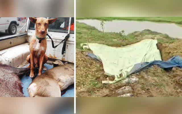 ubijeno 300 uličnih pasa
