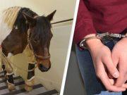 kidnapovan konj