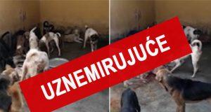 ubijanje pasa na Mauricijusu