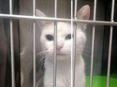 mačka u kavezu