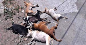 masovno trovanje pasa u Italiji